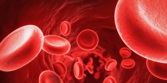 Penjelasan! Fungsi Sel Darah Merah dan Putih di Dalam Tubuh Manusia